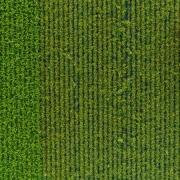 Cambio estructural en la agricultura