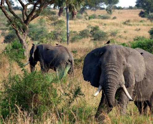 Lucha contra la extinción de especies a escala mundial